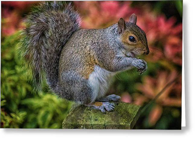 Squirrel Greeting Card by Martin Newman