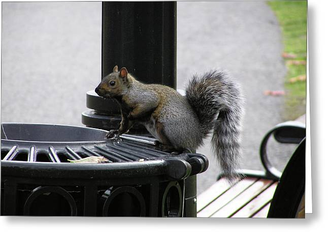 Squirrel On Garbage Can Greeting Card by Richard Mitchell