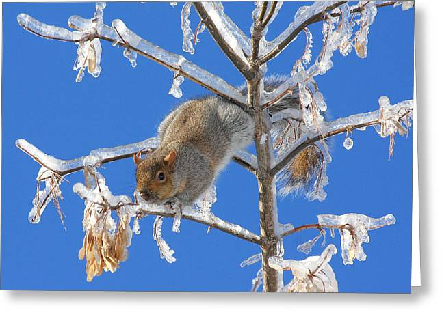 Greeting Card featuring the photograph Squirrel On Icy Branches by Doris Potter