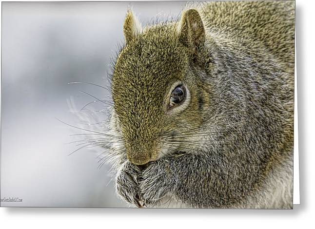 Squirrel On Macomb Orchard Trail Greeting Card