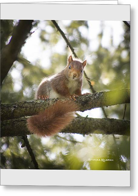 Greeting Card featuring the photograph Squirrel On The Spot by Stwayne Keubrick
