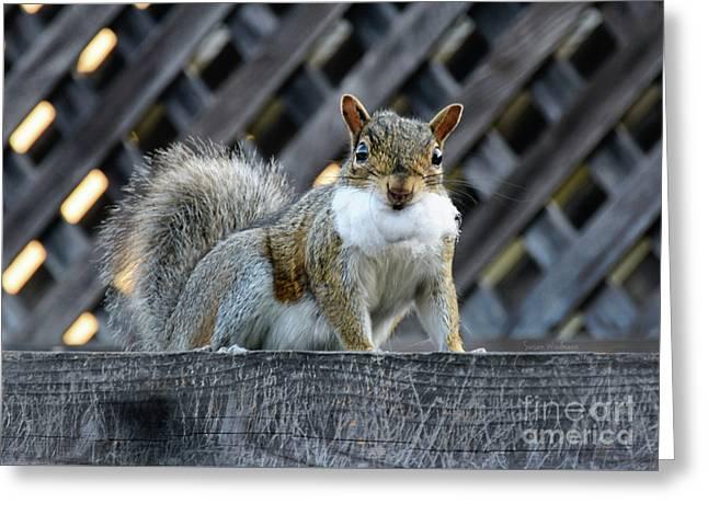 Squirrel Playing Santa Greeting Card