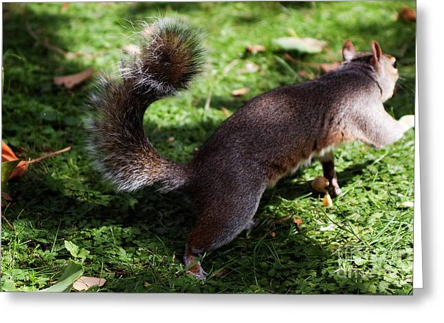 Squirrel Running Greeting Card