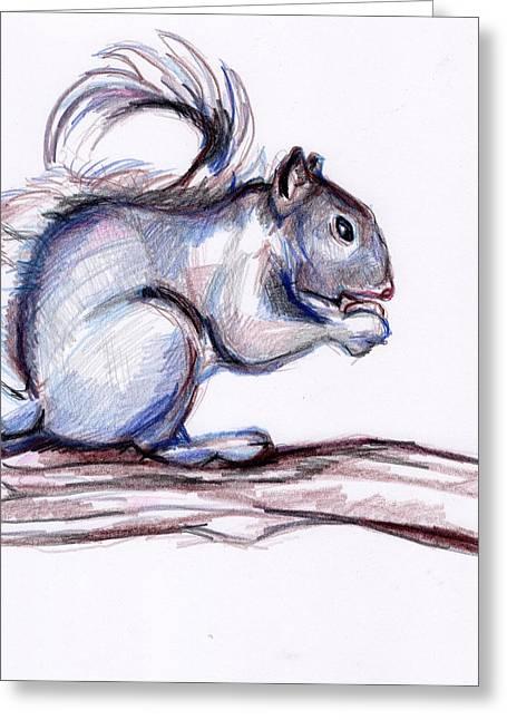 Squirrel Sketch Greeting Card