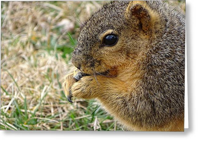 Squirrel Up Close And Personal Greeting Card by Theresa Campbell