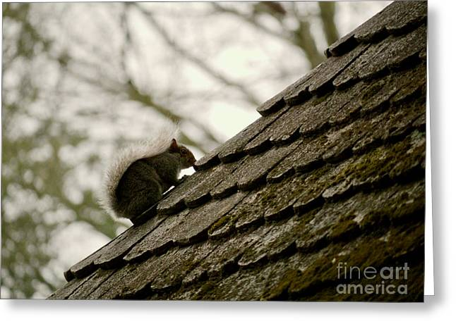 Squirrel Up High Greeting Card