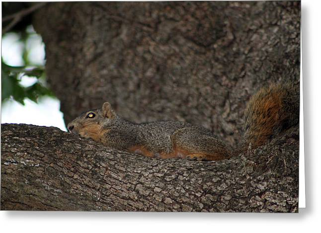 Squirrel1 Greeting Card by Evelyn Patrick