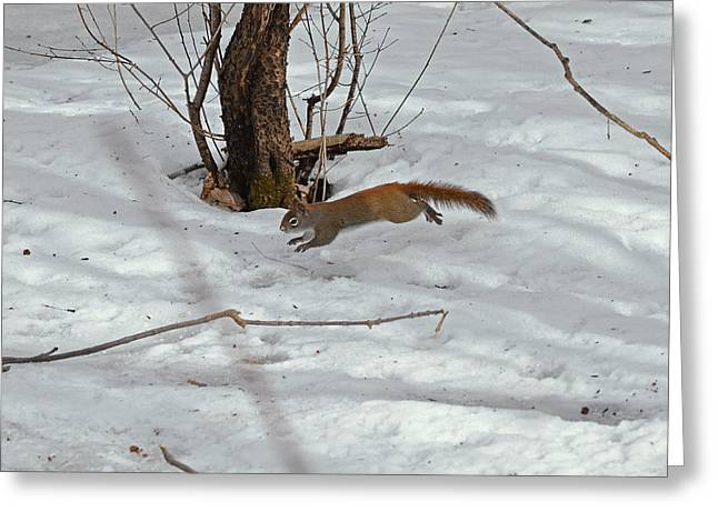 Squirrel's Galop  Greeting Card by Asbed Iskedjian