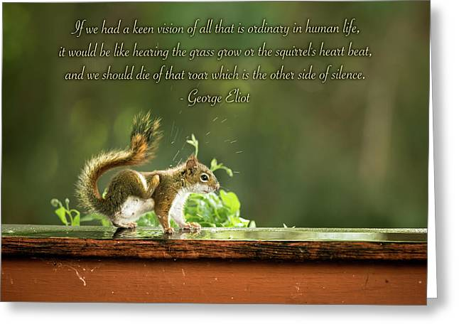Squirrel's Heart Beat-george Eliot Greeting Card by Onyonet  Photo Studios