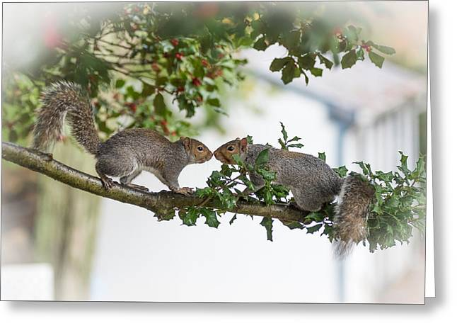 Squirrels Nose To Nose Greeting Card by Terry DeLuco