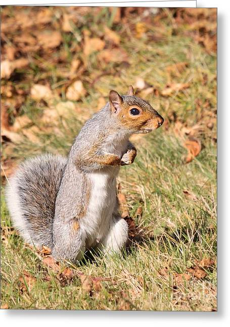 Squirrely Me Greeting Card