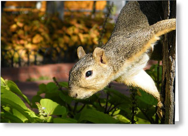 Squirrely Greeting Card by Stacy Frank