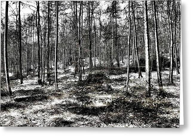 St Lawrence's Wood, Hartshill Hayes Greeting Card by John Edwards