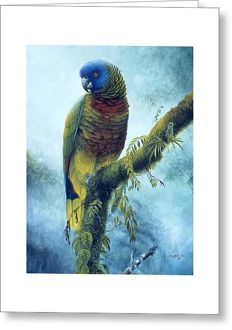 St. Lucia Parrot - Majestic Greeting Card by Christopher Cox