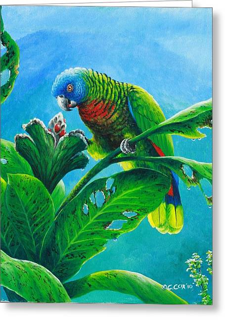 St. Lucia Parrot And Bwa Pain Marron Greeting Card by Christopher Cox