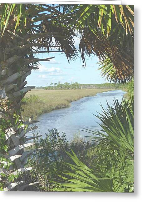 St. Mark's Marshes Greeting Card by Audrey Peaty
