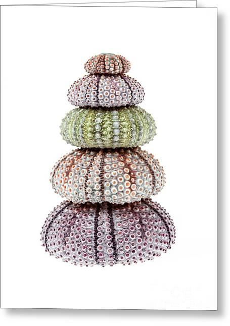 Stack Of Sea Urchins Greeting Card