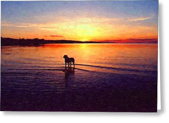 Staffordshire Bull Terrier On Lake Greeting Card