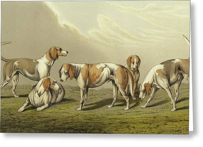 Stag Hounds Greeting Card by Henry Thomas Alken