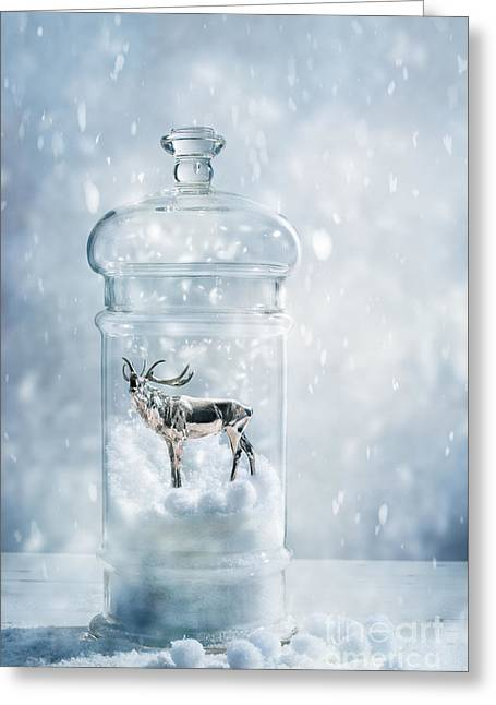 Stag In A Snow Globe Greeting Card by Amanda Elwell