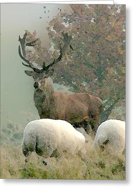 Stag Greeting Card by John Bradburn