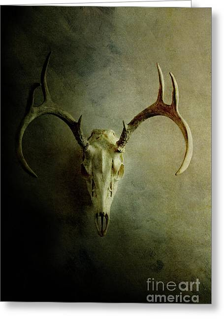 Greeting Card featuring the photograph Stag Skull by Stephanie Frey