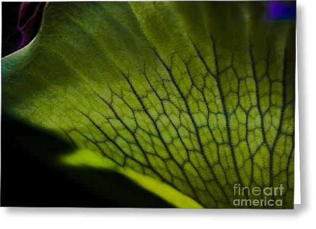 Staghorn Greeting Card by Rich Governali