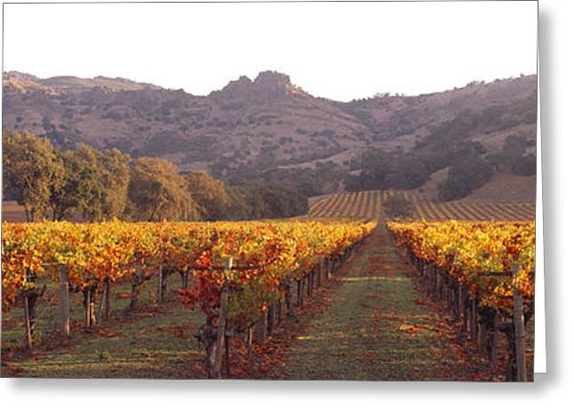 Stags Leap Wine Cellars Napa Greeting Card by Panoramic Images