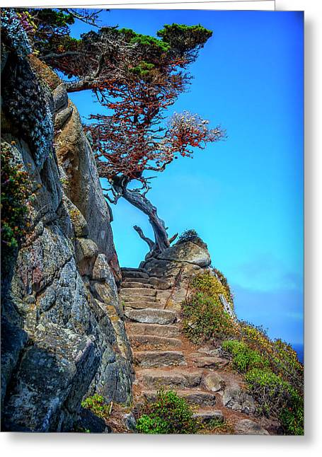 Stairway At Point Lobos Ca Img_1674 Greeting Card by Greg Kluempers