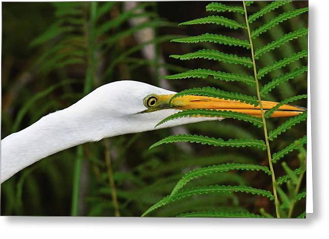 Stalking The Hopper - Egret Greeting Card