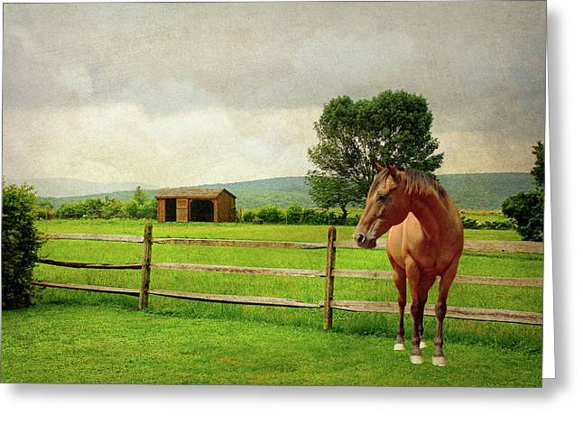 Greeting Card featuring the photograph Stallion At Fence by Diana Angstadt