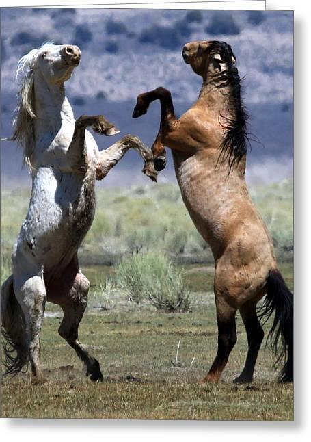 Stallion Fandango Greeting Card