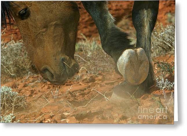 Stallion Scraping The Ground Greeting Card