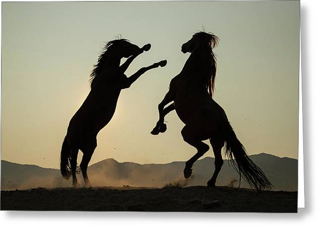 Stallion's Dance Greeting Card