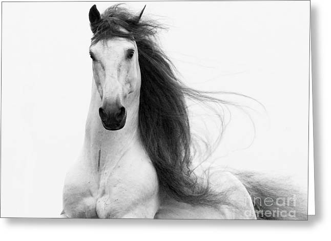 Stallion's Glory Greeting Card by Carol Walker