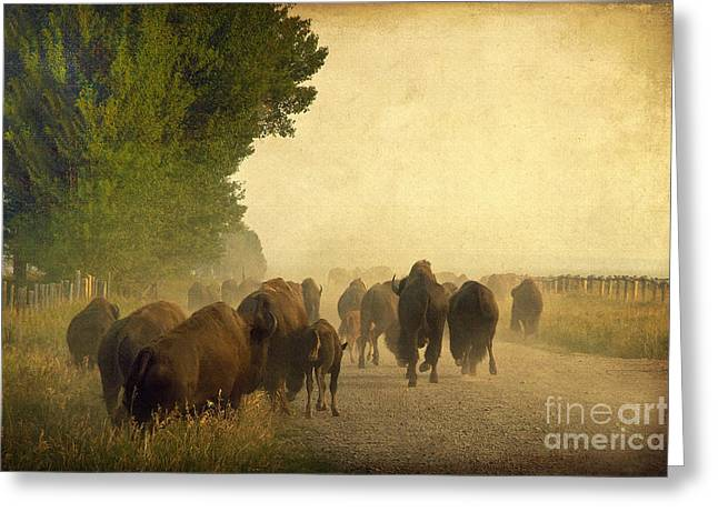 Stampede Greeting Card by Teresa Zieba