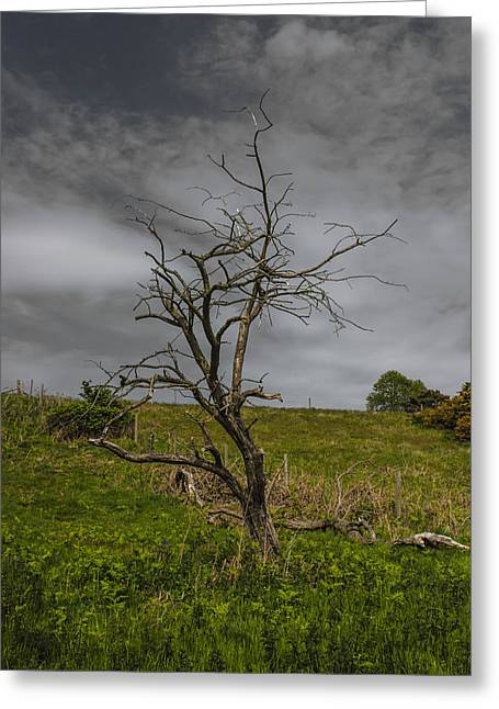 Stand Alone Greeting Card by Martin Newman