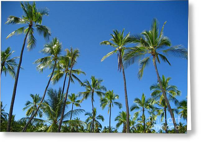 Stand Of Palms Greeting Card