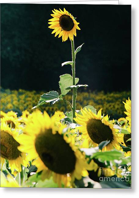 Greeting Card featuring the photograph Stand Out 2 by Andrea Anderegg