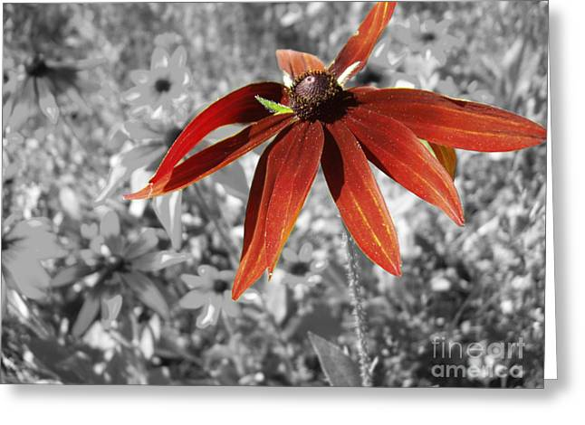 Stand Out  Greeting Card by Cathy  Beharriell