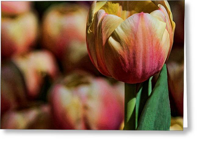 Greeting Card featuring the photograph Stand Out by Tammy Espino