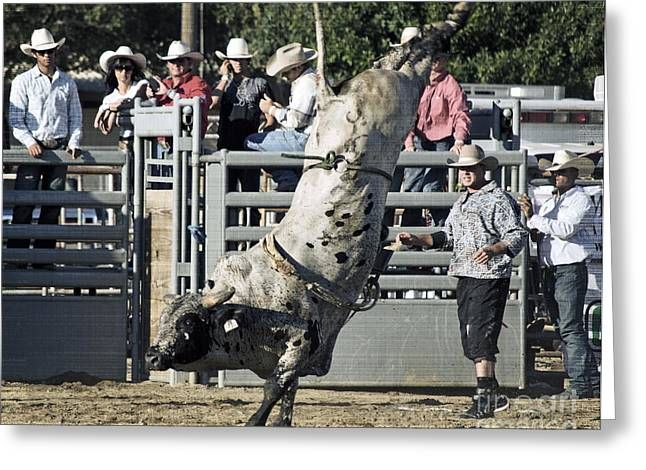 Bull Riding Greeting Cards - Stand Up Performance Greeting Card by Gwyn Newcombe