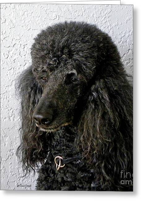 Standard Poodle Greeting Card