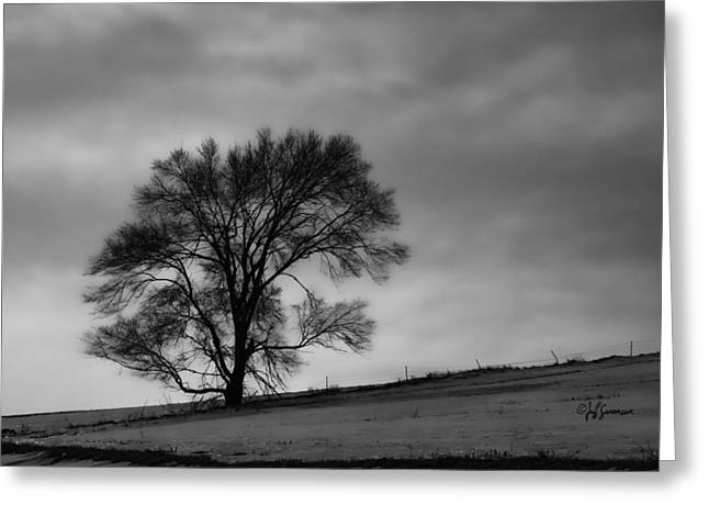 Standing Alone Greeting Card by Jeff Swanson