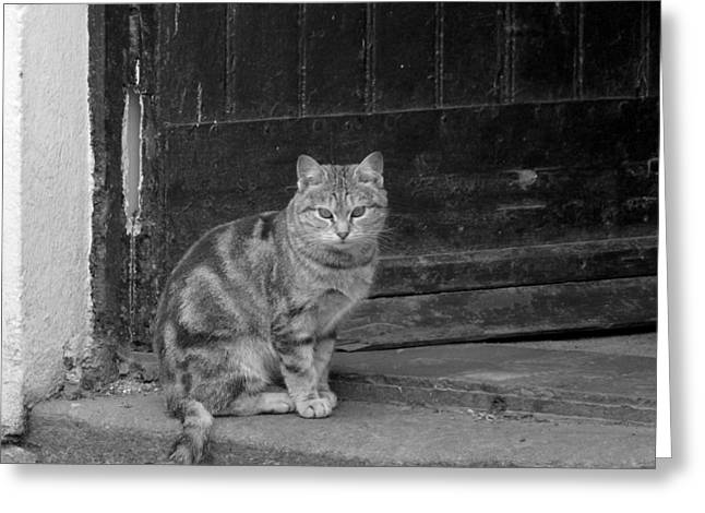 Standing Guard Greeting Card by Mike McGlothlen