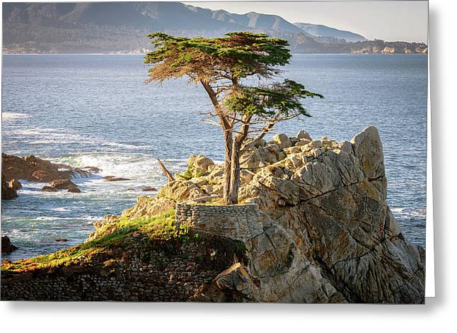 Standing Proud Greeting Card by Aron Kearney