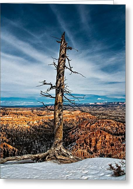 Standing Regardless Greeting Card by Christopher Holmes