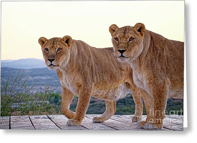 Standing Side By Side Greeting Card by Lucinda Walter