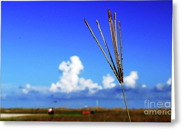 Greeting Card featuring the photograph Standing Tall by Gary Wonning