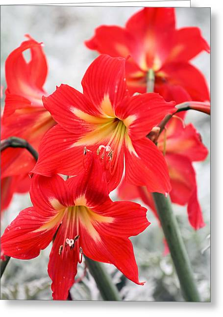 Standing Tall Greeting Card by Katherine White